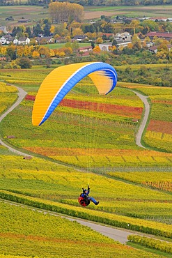 Paragliding over vineyards in autumn, Remstal, Baden-Wuerttemberg, Germany, Europe