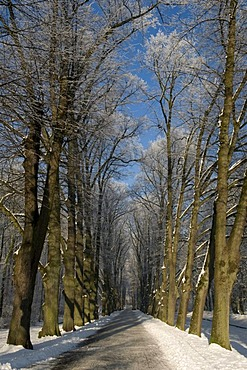 Avenue of trees on the palace grounds of Schloss Nordkirchen castle in winter, Muensterland, North Rhine-Westphalia, Germany, Europe