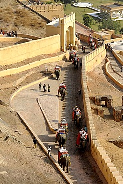 Elephant ride at the Palace of Amber, Amber, near Jaipur, Rajasthan, North India, India, South Asia, Asia