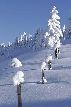 Winter landscape, Dienten, Salzburg, Austria, Europe