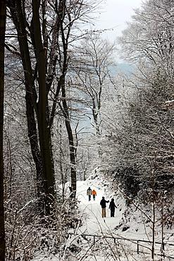 Pedestrians in the snowy woods, Essen, North Rhine-Westphalia, Germany, Europe