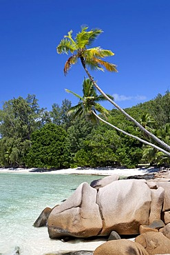 Coconut Palms (Cocos nucifera) and granite rocks on Anse Severe Beach, La Digue Island, Seychelles, Africa, Indian Ocean