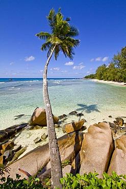 Coconut Palm (Cocos nucifera) and granite rocks by the sea, Anse Severe, La Digue Island, Seychelles, Africa, Indian Ocean