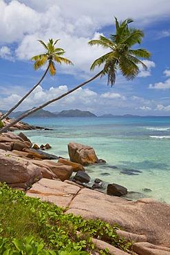 Coconut Palms (Cocos nucifera) and granite rocks on Anse Severe, La Digue Island, Seychelles, Africa, Indian Ocean