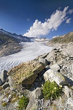 Rhone Glacier in front of Dammastock Mountain, Furka Pass, Valais, Switzerland, Europe