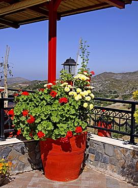 Geraniums, Crete, Greece, Europe
