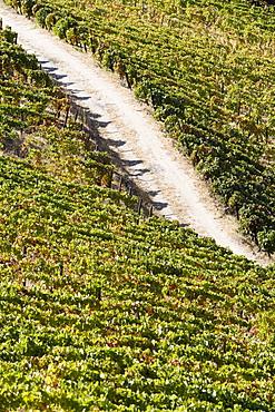 Douro vineyards, Peso da Regua, Portugal, Europe