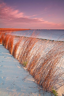Branches in the sand, beach near the De Slufter nature reserve at sunrise, Texel, Holland, The Netherlands, Europe - 832-196415