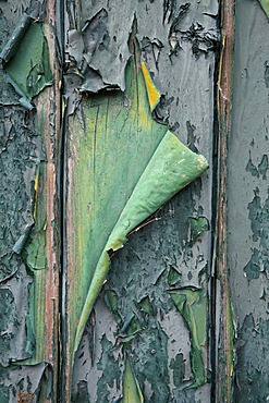 Flaking paint on an old wooden door, Texel, Holland, The Netherlands, Europe