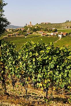 Barbaresco, Provincia Cuneo, Piemont, Piedmont, Italy, Europe