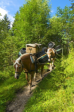 Supply of Willersalpe alp only by horses, Hinterstein, Hintersteiner Valley, Bad Hindelang, Allgaeu, Bavaria, Germany, Europe