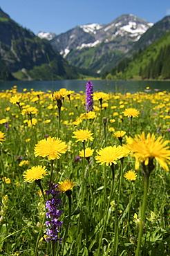 Vilsalpsee lake in the Naturschutzgebiet Vilsalpsee nature reserve, Tannheimer Tal Valley, Allgaeu, Tyrol, Austria, Europe