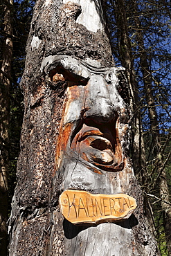 Carved face in a tree trunk, The giant of Kaunertal, Oetztal Alps, Tyrol, Austria, Europe