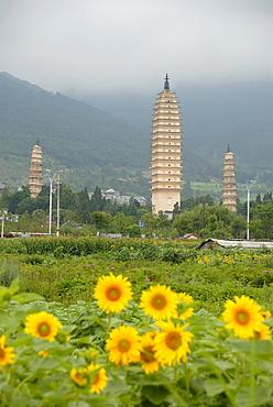 Ancient Buddhist towers, sunflowers, Three Pagodas, Dali, Yunnan Province, People's Republic of China, Asia