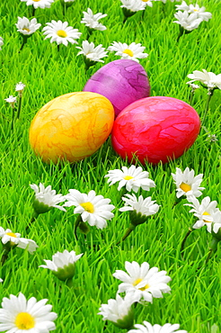 Colorful Easter eggs on flower meadow with daisy flowers
