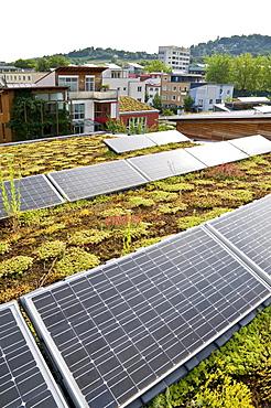 Planted roof and solar system, Vauban, Freiburg, Baden-Wuerttemberg, Germany, Europe
