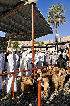 Omani man in traditional dress, livestock or animal market at Nizwa, Hajar al Gharbi Mountains, Al Dakhliyah region, Sultanate of Oman, Arabia, Middle East
