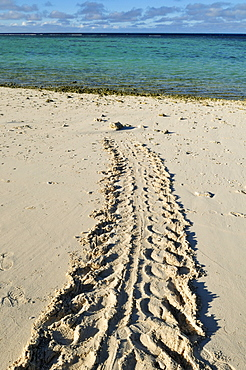Track of a green sea turtle on the beach of Heron Island, Capricornia Cays National Park, Great Barrier Reef, Queensland, Australia