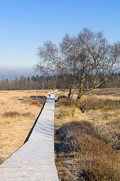 Hautes Fagnes Reserve in wintertime, frozen Boardwalk Im Platten Venn, Eupen, Province Liege, Belgium