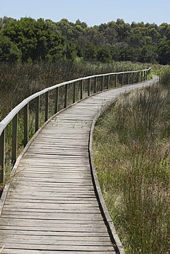 Wooden path, River and Heritage Trail, Sale Common, Gippsland, Victoria, Australia