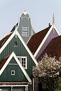 Typical wooden houses from the 17th century, roofs, historic city De Rijp near Alkmaar, Province of North Holland, Netherlands, Europe