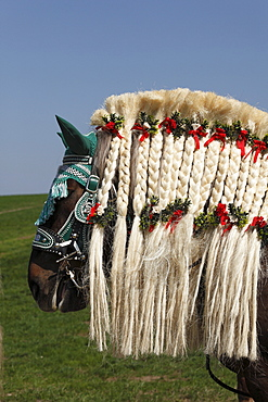 Decorated horse, Georgiritt, George's Ride, Easter procession, Traunstein, Chiemgau, Upper Bavaria, Bavaria, Germany, Europe