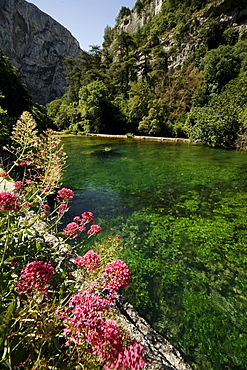 Colorful flowers on the green Sorgue River, close to its source, near Fontaine de Vaucluse, Provence, France, Europe