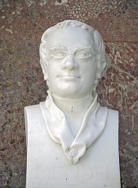 Bust of Gregor Mendel, Austrian Augustinian monk and naturalist