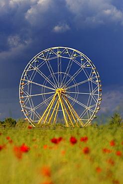 Ferris wheel, poppy field, Tuerkheim, Unterallgaeu district, Bavaria, Germany, Europe