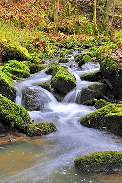 Brook, North Black Forest, Baden-Wuerttemberg, Germany, Europe