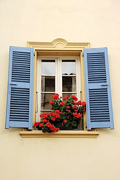 Blooming Geraniums in flower box at window with blue shutters, La Colle sur Loup, Alpes-Maritimes, Provence-Alpes-Cote d'Azur, Southern France, France, Europe, France, Europe