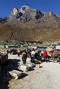 Tibetan yak caravan at the sherpa village of Khumjung, Holy Mountain Khumbi Yul Lha, Khumbila, 5761 m, Sagarmatha National Park, Khumbu Himal, Nepal, Asia