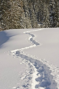 Snow-covered winter landscape with snow shoe tracks, Achenkirch, Tyrol, Austria