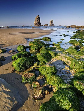 Seaweed and rockpools at Cannon Beach, Clatsop County, Oregon, USA, North America