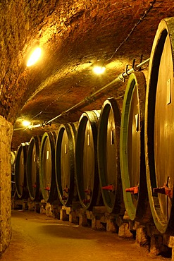 Barrels of wine in a wine cellar, Cejkovice, Czech Republic, Europe