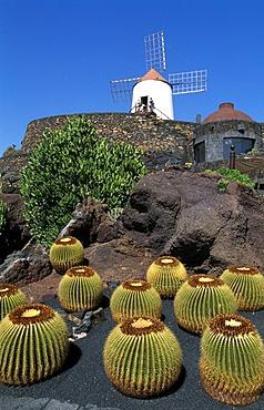 Jardin de Cactus in Guatiza, Lanzarote, Canary Islands, Spain, Europe