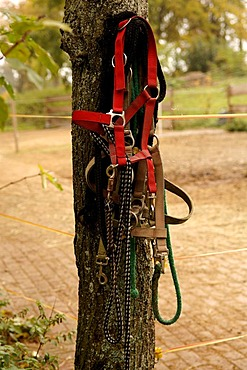 Horse's bridle hanging from a tree