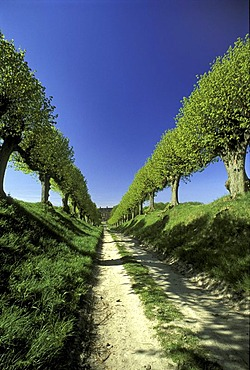 Alley of lime trees, Schloss Bothmer, Kluetzer Winkel, Mecklenburg-Western Pomerania, Germany, Europe