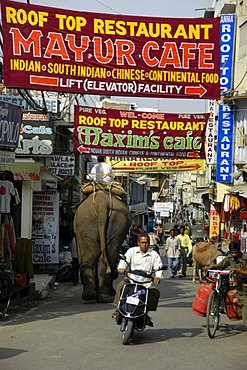 Colorful banners over an elephant, moped and people in a street in Udaipur, Rajasthan, India, Asia