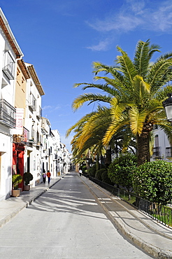 Palm-lined street in the historic centre of Benissa, Alicante, Costa Blanca, Spain