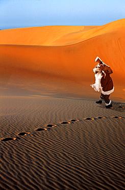 Santa Claus lost in the desert