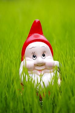 Garden gnome on lawn