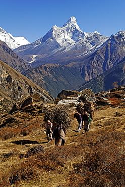 Women carrying bundles of firewood, snow covered mountain peaks at back, Sagarmatha National Park, UNESCO World Heritage Site, Khumbu Himal, Himalayas, Nepal, Asia