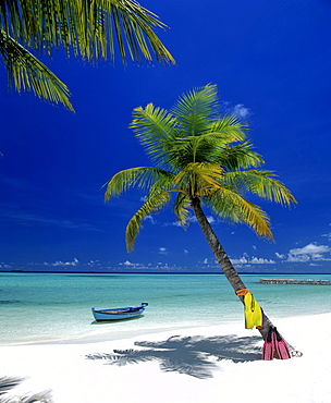 Palm tree, beach, snorkeling gear and boat, Maldives, Indian Ocean