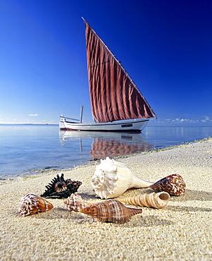 Shells on the beach, sailboat, calm lagoon, Maldives, Indian Ocean