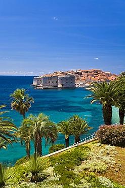 View through palm trees onto Dubrovnik's historic centre and UNESCO World Heritage Site, Ragusa, Dubrovnik-Neretva, Dalmatia, Croatia, Europe