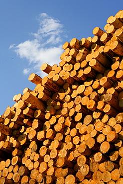 Tree trunks on a lumberyard