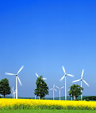 Alternative energy source: wind turbines and a canola field