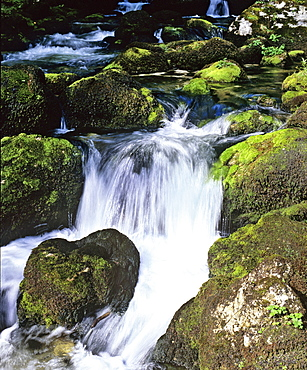 Small waterfall in a mountain stream with moss-covered rocks, movement