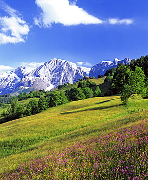 Mt. Bratschenkopf, Mt. Hochkoenig and alpine meadow, Berchtesgadener Alps, Salzburger Land, Austria, Europe